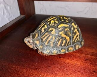"""$95  Carved wood turtle.  2.5"""" H, 5"""" L, 3.5"""" W."""