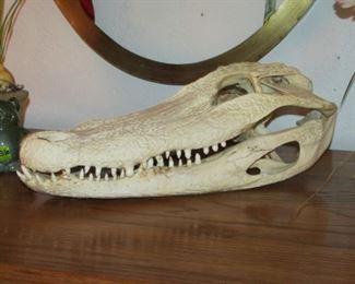 15 inch Alligator Skull