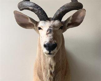 Antelope Head Mount