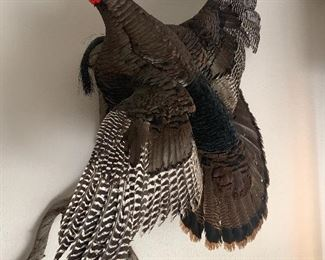 Wild Turkey Mounted - Taxidermy