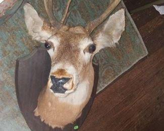 Large Buck 175.00