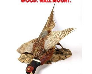 Lot 125 Taxidermy Bird Mounted on Wood. Wall Mount.