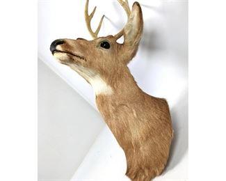 Lot 130 Taxidermy Deer Wall Mount.