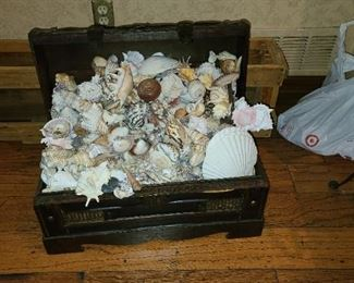 Treasure Chest full of seashells $120 OBO