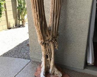 saguaro ribs on stone