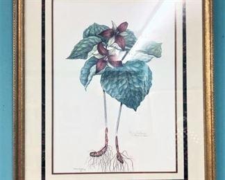 Red Trillium Watercolor LI