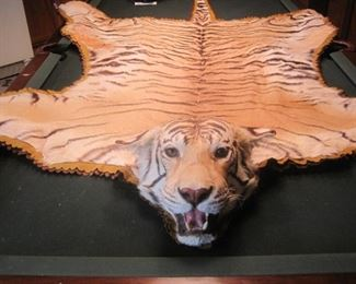 Bengal Tiger. All trophy's were legally hunted and legally imported. All taxidermy was conducted by Jonas Brothers of Denver Colorado, one of the nations premier taxidermy studios.  Large Cat Trophy's / Rugs are for Minnesota sales only.