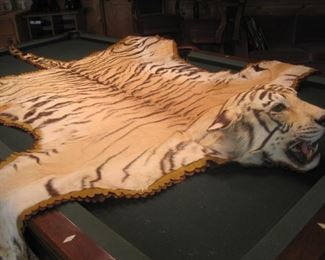 All trophy's were legally hunted and legally imported. All taxidermy was conducted by Jonas Brothers of Denver Colorado, one of the nations premier taxidermy studios.  Large Cat Trophy's / Rugs are for Minnesota sales only.