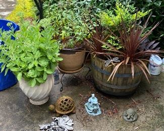 Variety of Butterfly attracting plants