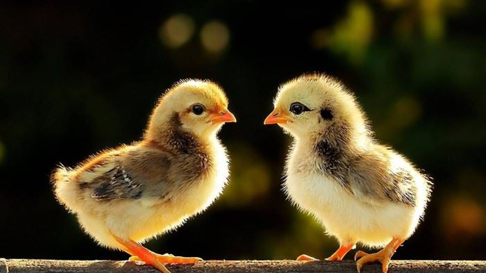 Two Chicks A Tag Estate Sales.   Please visit us on Facebook to book your sale!