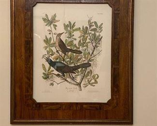 Print - 24x28 - Audubon '37