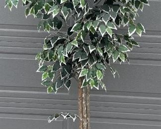 6.5 Foot Faux Ficus Tree With Wicker Base
