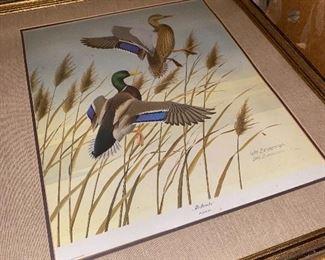 Framed & Matted Duck Picture - Mallard by Wm Zimmerman