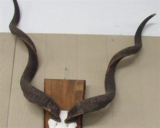 Wall Horns