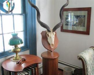 African Kudu European Mount