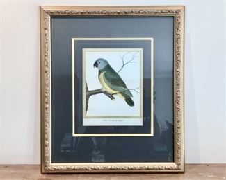 A Handcolored Parrot From Sengal Lot #: 4