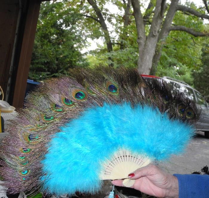 Lovely peacock fan
