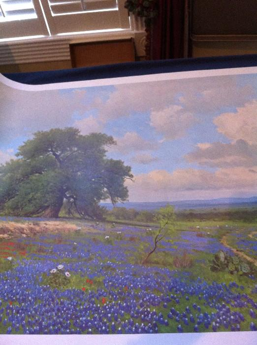 Salinas print of bluebonnets