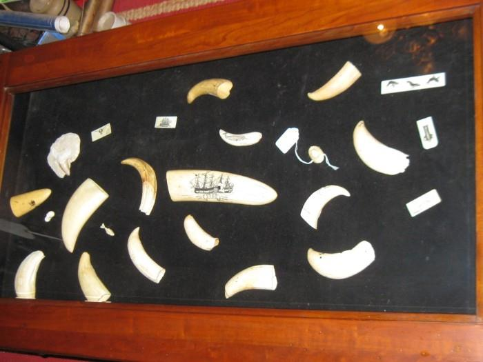 "MANY PIECES OF WHALE TEETH, SOME WITH SCRIMSHAW.  THE ONE IN CENTER IS 8"" LONG."