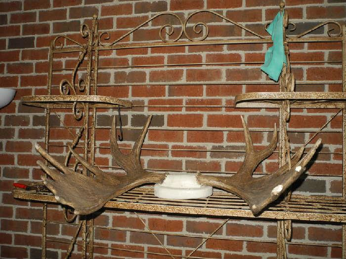 Moose antlers on a beautiful baker's rack