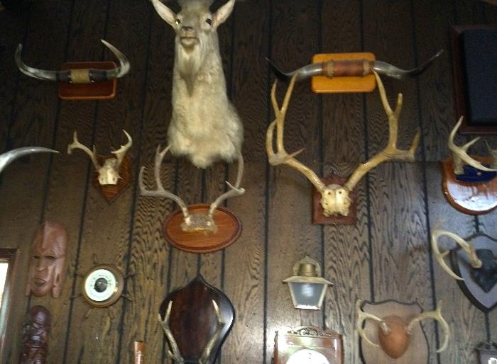 Large collection of antlers, horns & taxidermy