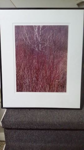 "SIGNED Eliot Porter ""Red Osier"" Near Great Barring"