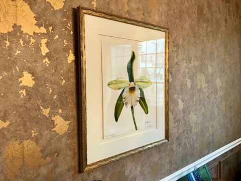 Original gouache painting Matthew Moore Tulipa