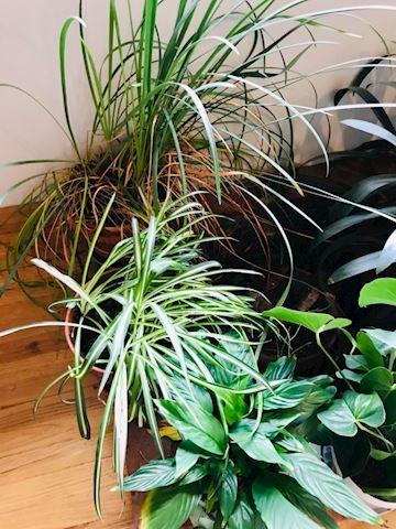 Large assortment of house plants