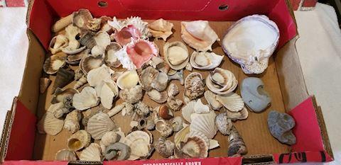 Sea shell lot