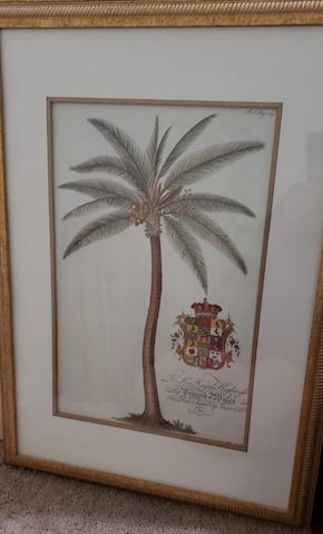 Framed Antique Styled Palm
