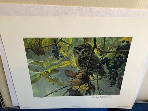 Saw-Whet Owl and Wild Grapes by Bateman