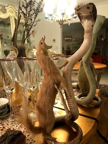 Taxidermy Mongoose and Cobra Snake Stuffed Decor