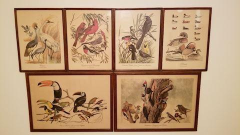 Vintage Arthur Singer Bird Prints