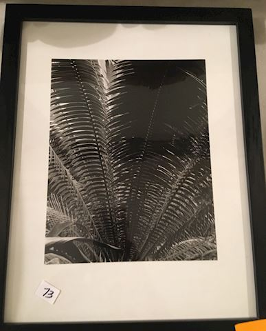 Black and White Photograph - Ferns