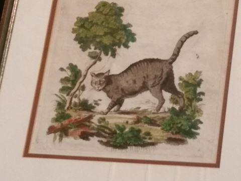 PR. OF VINTAGE FRAMED PRINTS-CATS