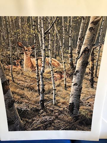 Whitetail Spring by Seerey Lester