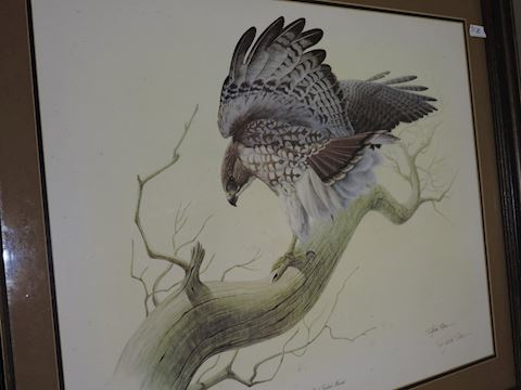 Signed Art Richard Sloan - Red Tailed Hawk w/Frame