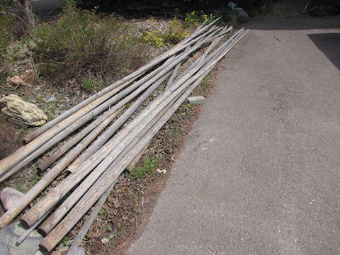 Set of Tipi (Teepee) poles