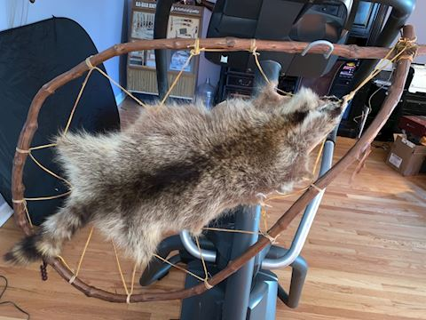 Raccoon dream catcher