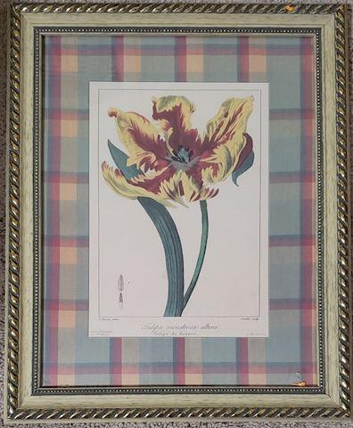 #1 Tulipa Altera 11x14 Picture