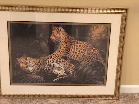 Cheetah in a Frame