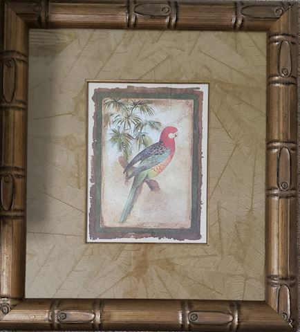 22x20 Bahama Parrot Framed Picture