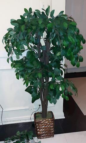 FR  204  Artificial tree