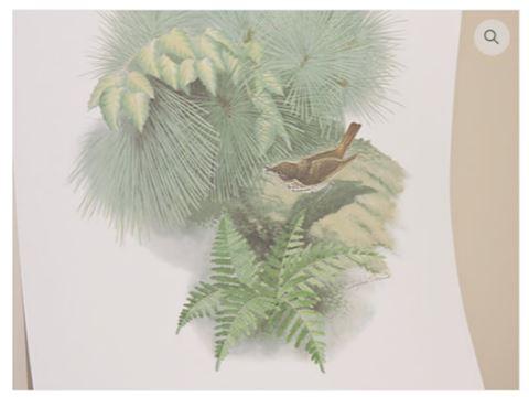 Art by Richard Sloan - Bird - Certified Print