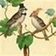 Birds Of A Feather Estate Sales Logo