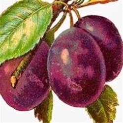 Purple Plum Estate Liquidators Logo