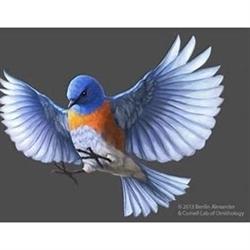 Blu Bird Estate And Auctions Logo