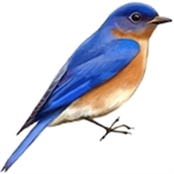 Bluebird Estate Sales, LLC Logo