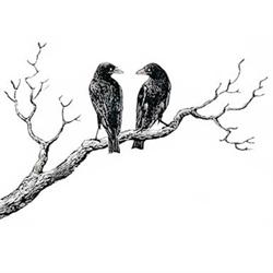 White Raven Estate Sales, LLC