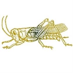 A Golden Grasshopper Logo